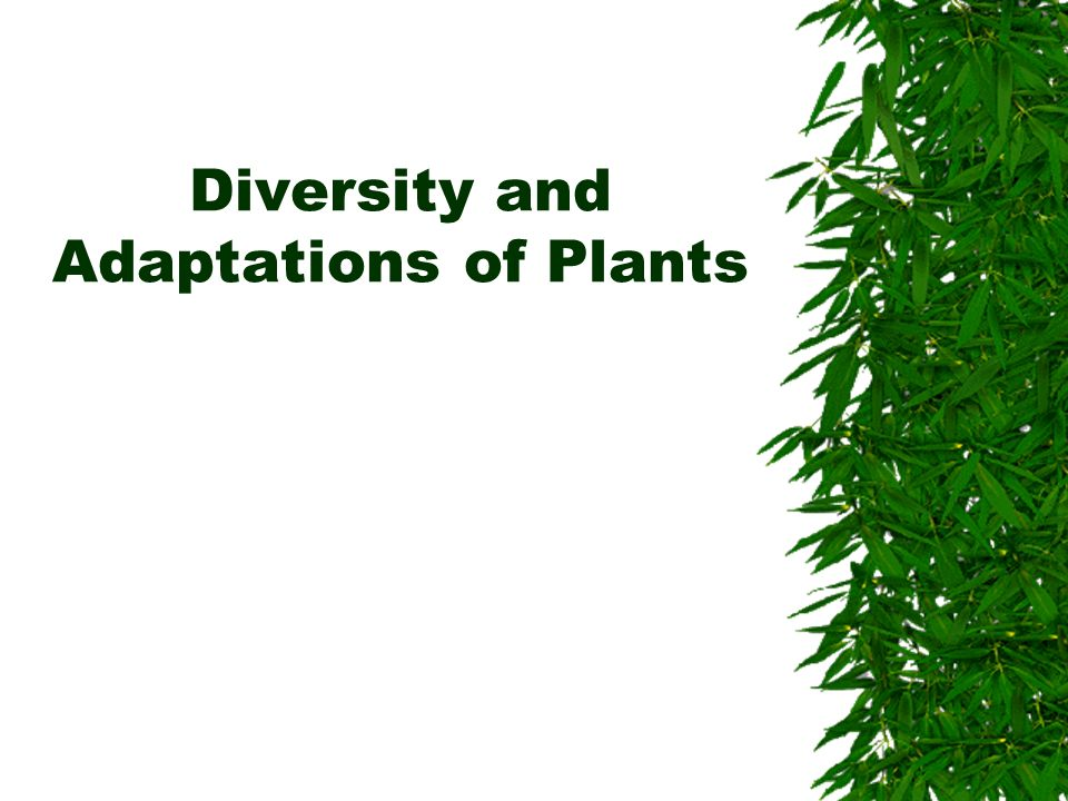 Diversity and Adaptations of Plants
