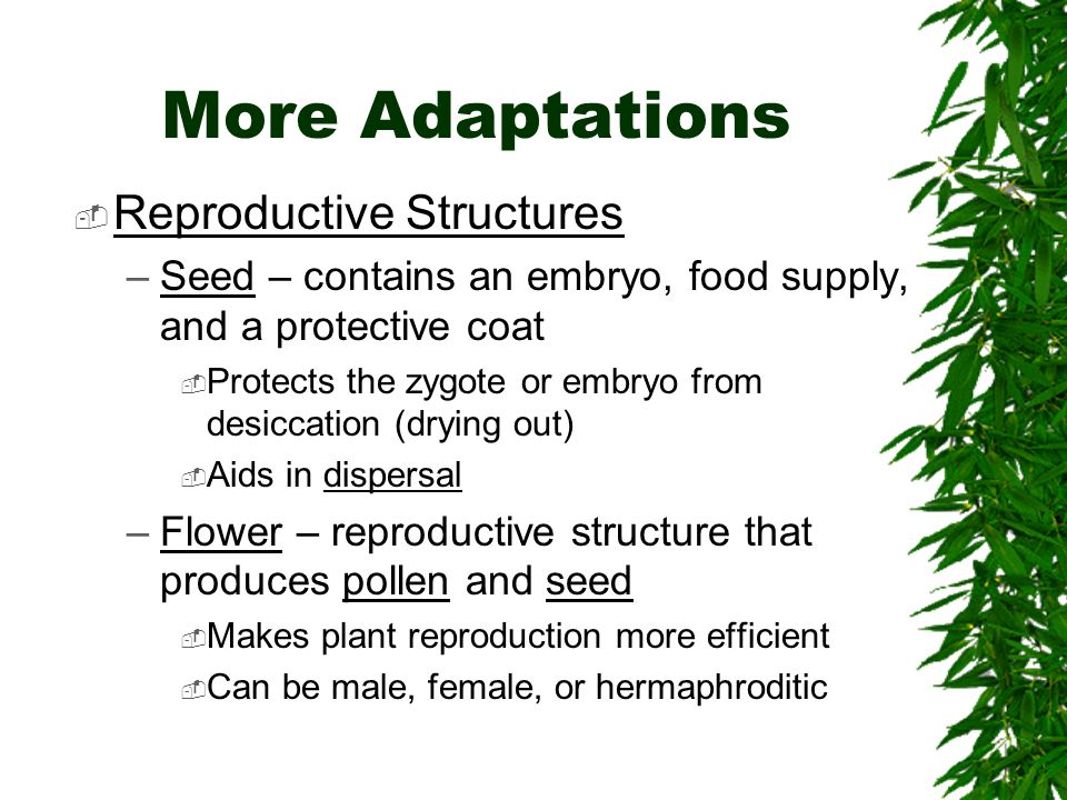 More Adaptations  Reproductive Structures –Seed – contains an embryo, food supply, and a protective coat  Protects the zygote or embryo from desiccation (drying out)  Aids in dispersal –Flower – reproductive structure that produces pollen and seed  Makes plant reproduction more efficient  Can be male, female, or hermaphroditic