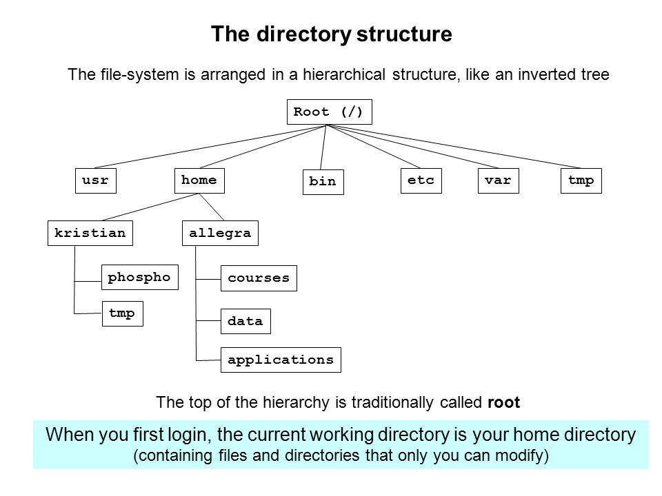 The directory structure Root (/) home bin etcvartmpusr allegrakristian courses applications data phospho tmp The file-system is arranged in a hierarchical structure, like an inverted tree The top of the hierarchy is traditionally called root When you first login, the current working directory is your home directory (containing files and directories that only you can modify)