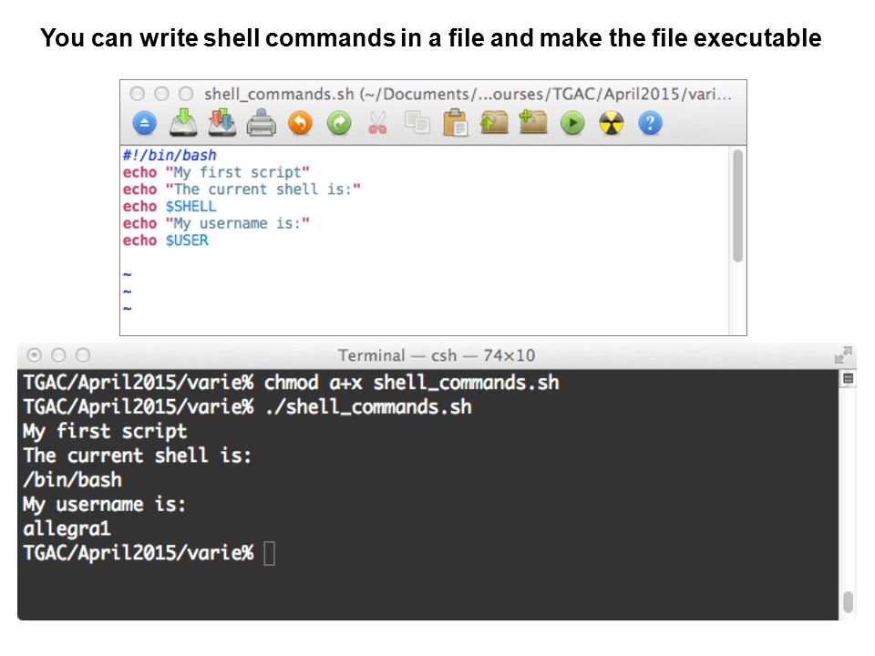You can write shell commands in a file and make the file executable