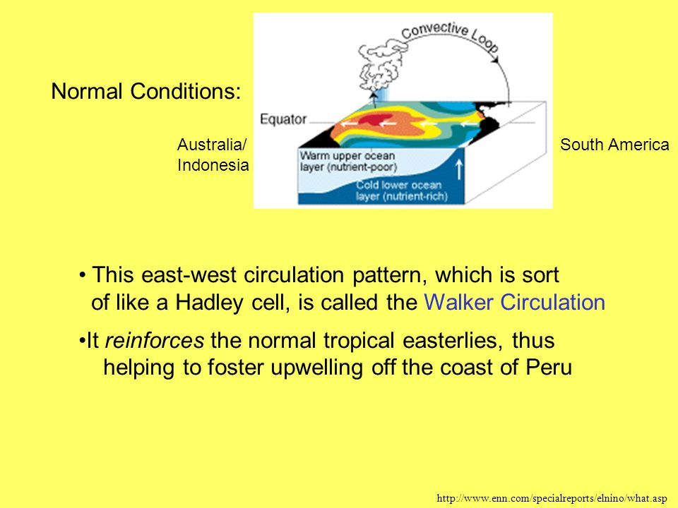 Normal Conditions:   This east-west circulation pattern, which is sort of like a Hadley cell, is called the Walker Circulation It reinforces the normal tropical easterlies, thus helping to foster upwelling off the coast of Peru Australia/ Indonesia South America