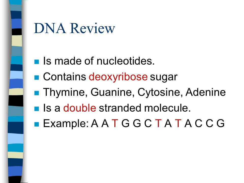 DNA Review n Is made of nucleotides.