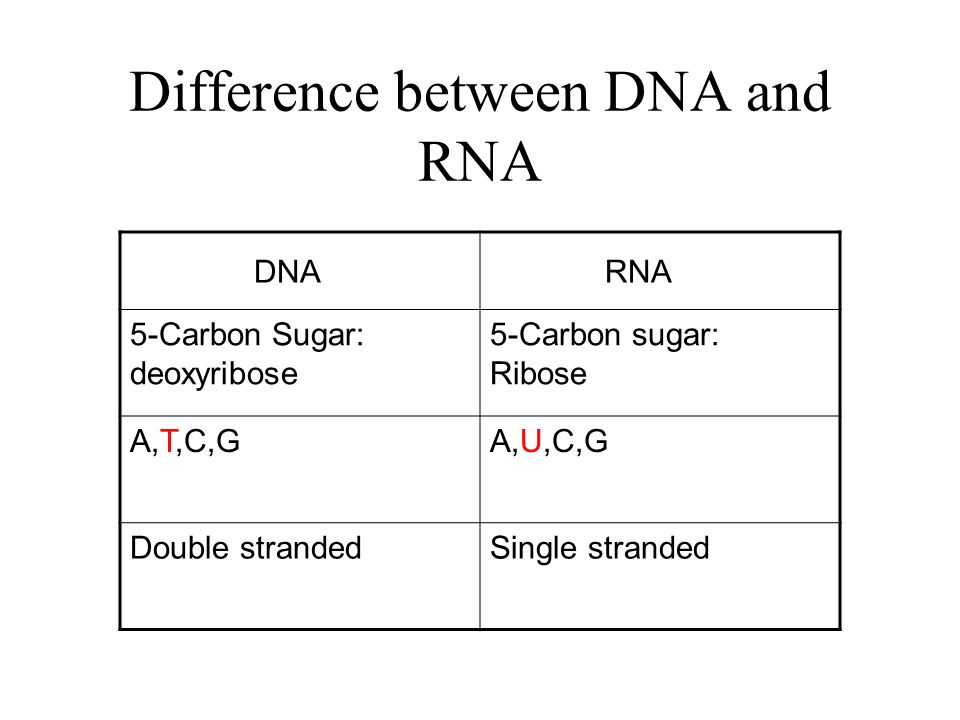 4 Difference Between Dna And Rna Dna Rna 5 Carbon Sugar Deoxyribose 5 Carbon Sugar Ribose Atcgaucg Double Strandedsingle Stranded