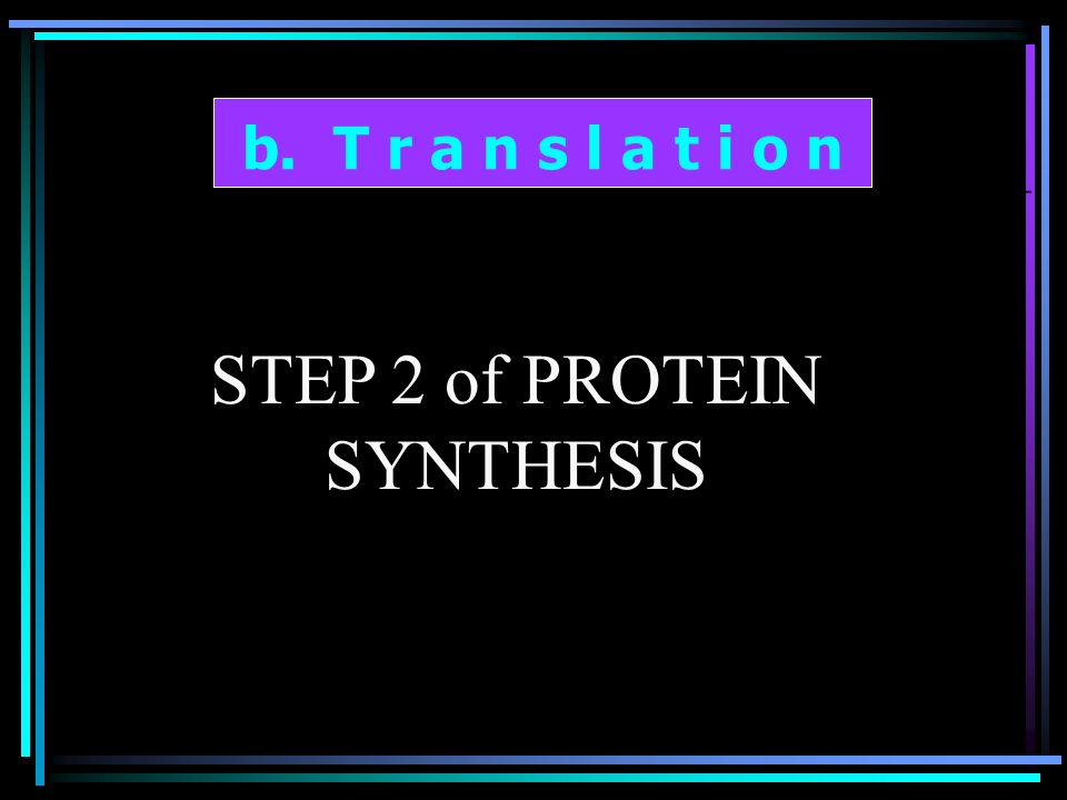 b. T r a n s l a t i o n STEP 2 of PROTEIN SYNTHESIS