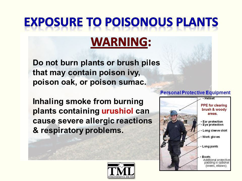 Do not burn plants or brush piles that may contain poison ivy, poison oak, or poison sumac.