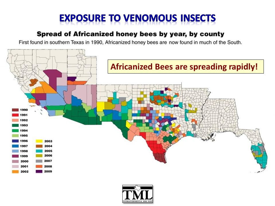 Africanized Bees are spreading rapidly!