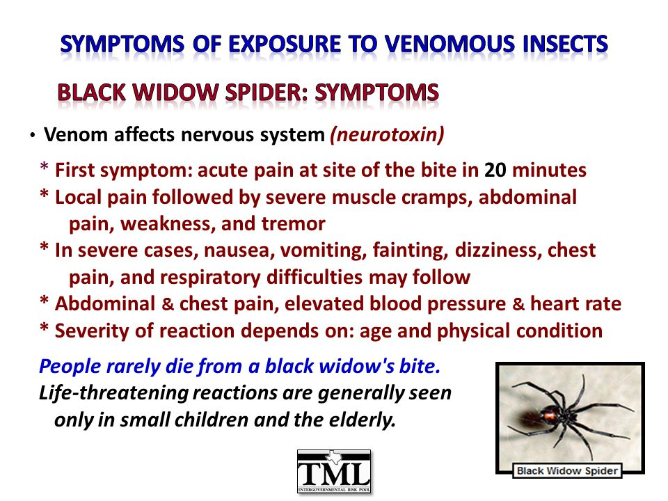 Venom affects nervous system (neurotoxin) * First symptom: acute pain at site of the bite in 20 minutes * Local pain followed by severe muscle cramps, abdominal pain, weakness, and tremor * In severe cases, nausea, vomiting, fainting, dizziness, chest pain, and respiratory difficulties may follow * Abdominal & chest pain, elevated blood pressure & heart rate * Severity of reaction depends on: age and physical condition People rarely die from a black widow s bite.
