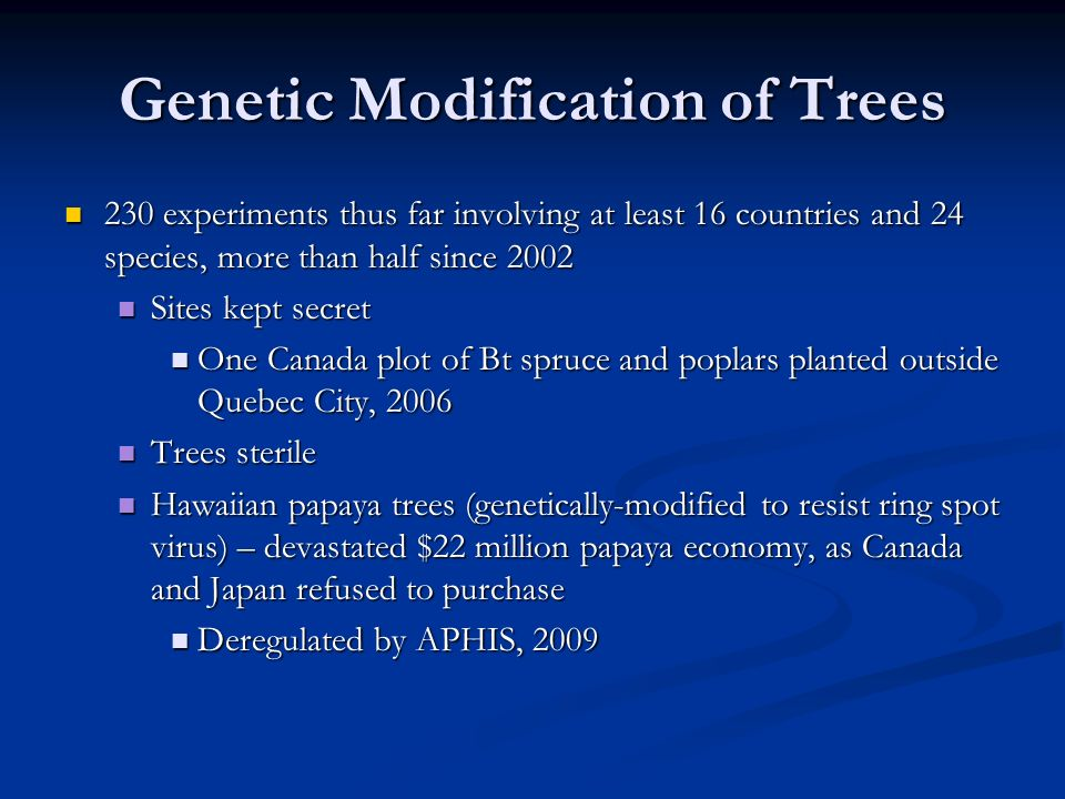Genetic Modification of Trees 230 experiments thus far involving at least 16 countries and 24 species, more than half since 2002 230 experiments thus far involving at least 16 countries and 24 species, more than half since 2002 Sites kept secret Sites kept secret One Canada plot of Bt spruce and poplars planted outside Quebec City, 2006 One Canada plot of Bt spruce and poplars planted outside Quebec City, 2006 Trees sterile Trees sterile Hawaiian papaya trees (genetically-modified to resist ring spot virus) – devastated $22 million papaya economy, as Canada and Japan refused to purchase Hawaiian papaya trees (genetically-modified to resist ring spot virus) – devastated $22 million papaya economy, as Canada and Japan refused to purchase Deregulated by APHIS, 2009 Deregulated by APHIS, 2009