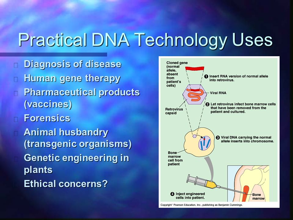 Practical DNA Technology Uses n Diagnosis of disease n Human gene therapy n Pharmaceutical products (vaccines) n Forensics n Animal husbandry (transgenic organisms) n Genetic engineering in plants n Ethical concerns