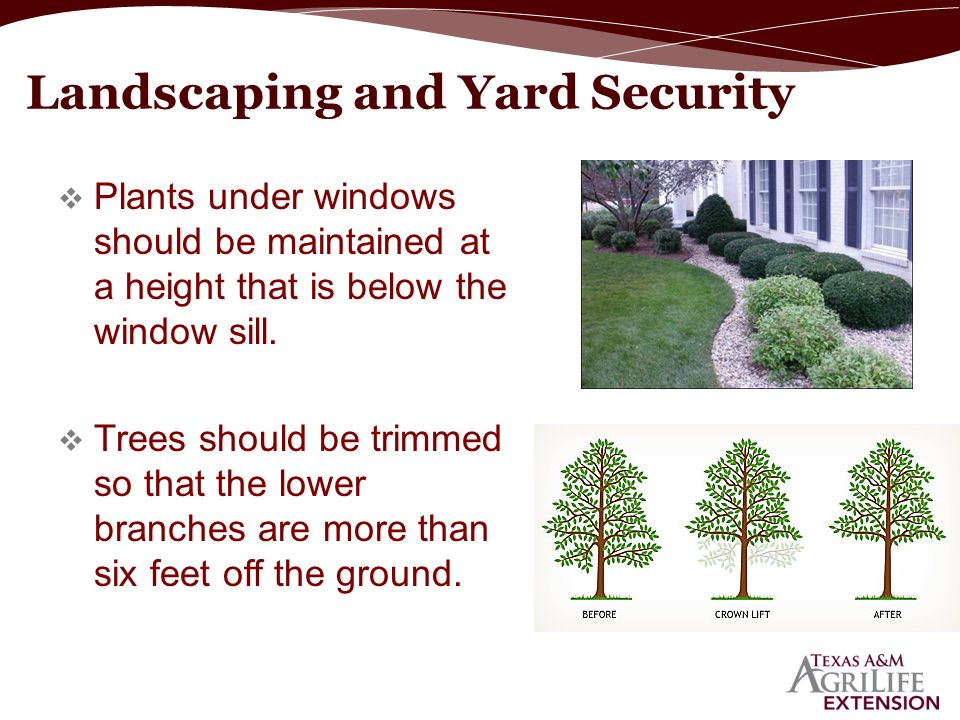 Plants Under Windows Should Be Maintained At A Height That Is Below The Window Sill