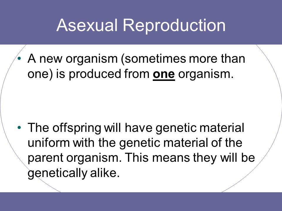 Asexual reproduction budding ppt background