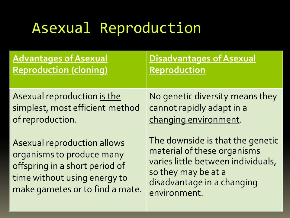 Accommodates asexual reproduction pictures