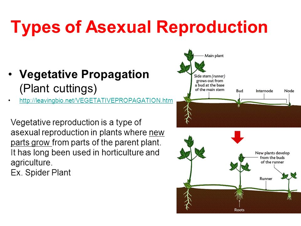 Various type of vegetative propagation asexual reproduction