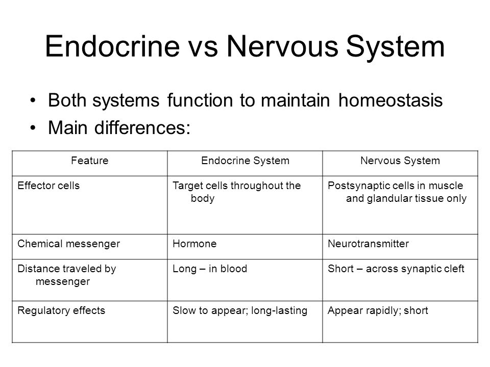 Endocrine System Chapter 16 Overview Overall Goal Of Endocrine