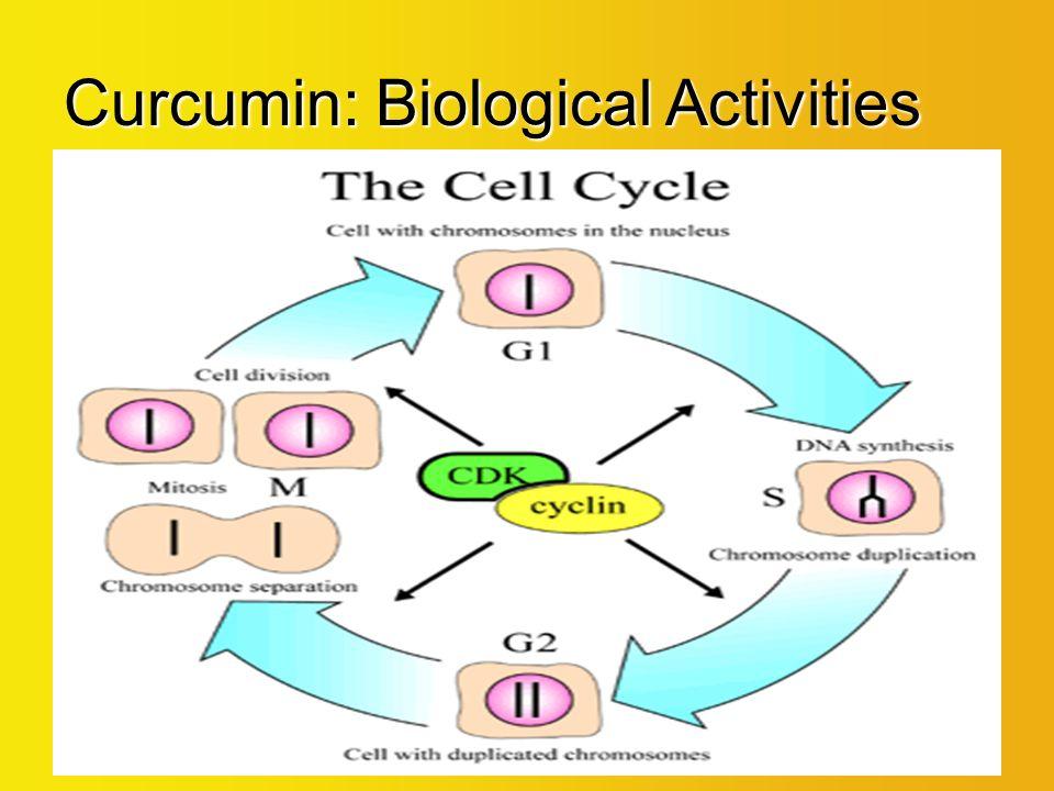 Curcumin Extreme™ Julian Blumenfeld, MD Chief Medical