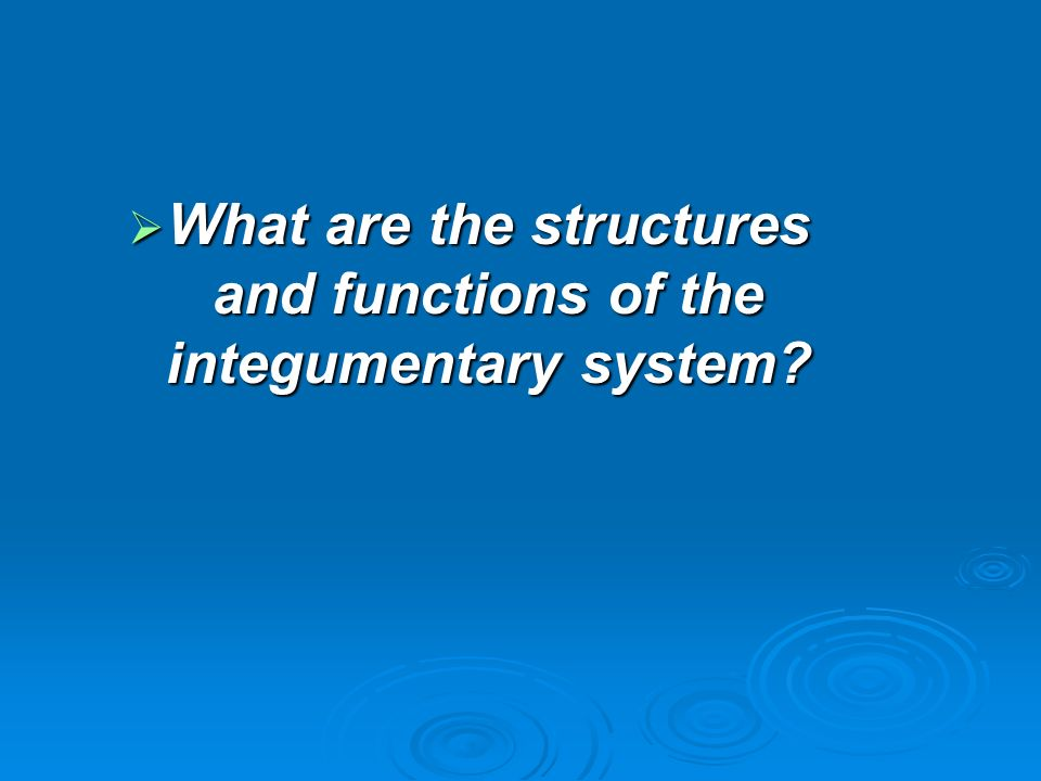  What are the structures and functions of the integumentary system