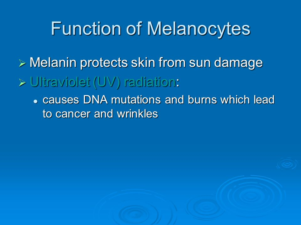 Function of Melanocytes  Melanin protects skin from sun damage  Ultraviolet (UV) radiation: causes DNA mutations and burns which lead to cancer and wrinkles causes DNA mutations and burns which lead to cancer and wrinkles