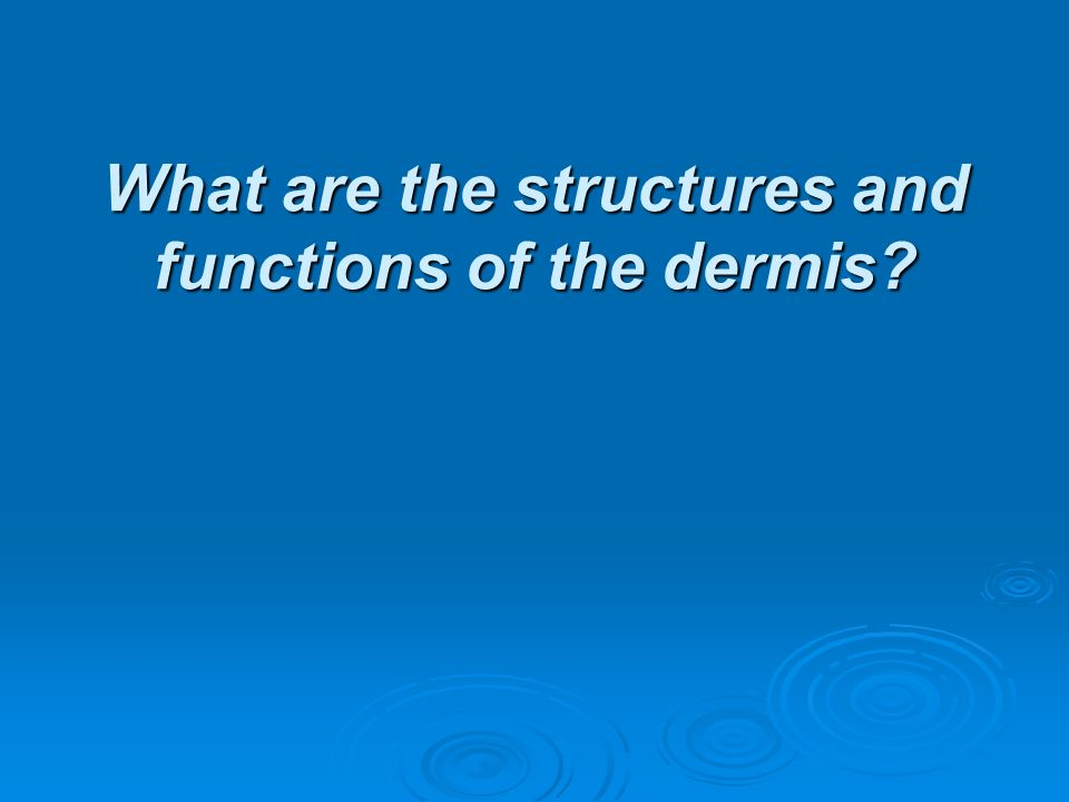 What are the structures and functions of the dermis