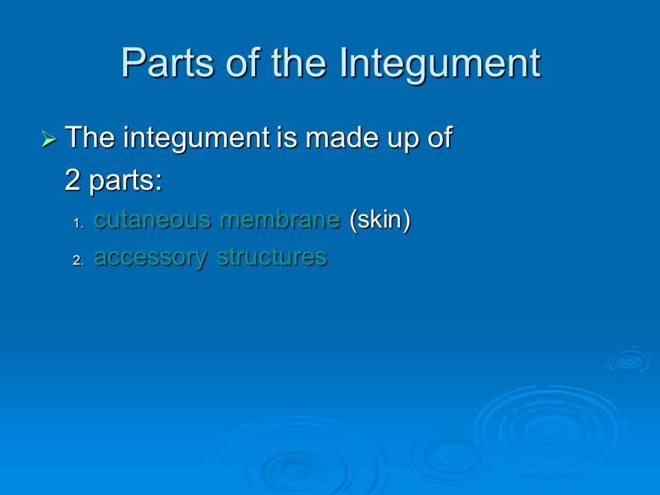 Parts of the Integument  The integument is made up of 2 parts: 1.