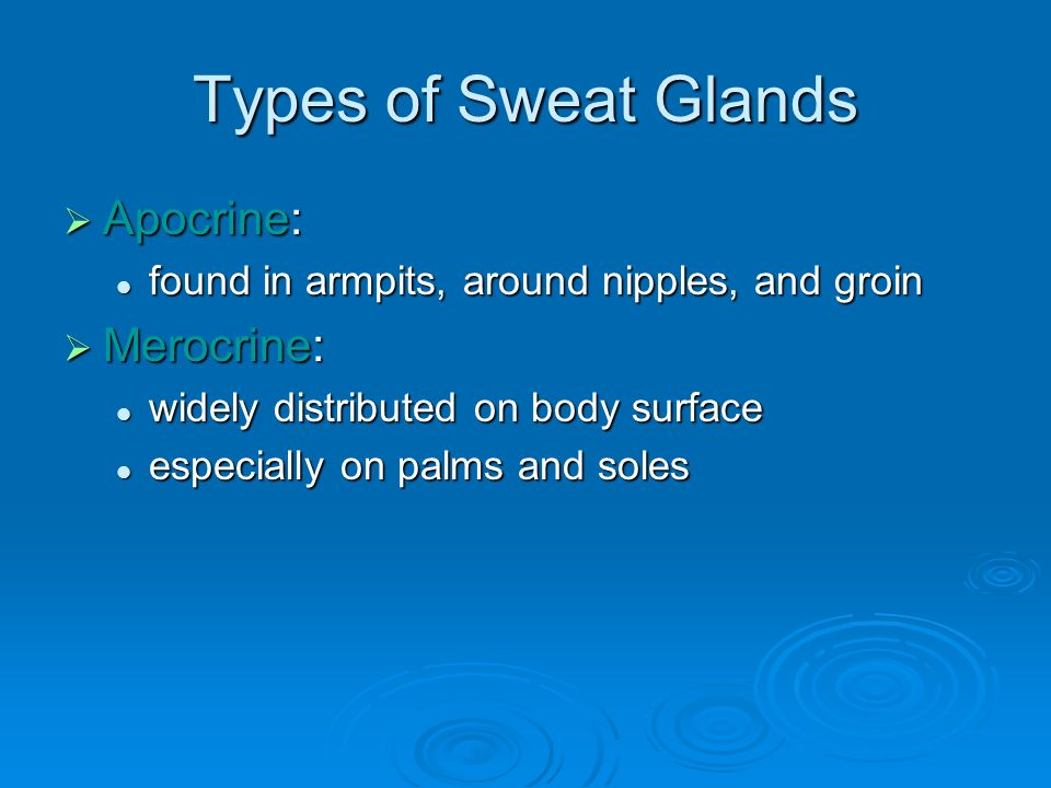 Types of Sweat Glands  Apocrine: found in armpits, around nipples, and groin found in armpits, around nipples, and groin  Merocrine: widely distributed on body surface widely distributed on body surface especially on palms and soles especially on palms and soles