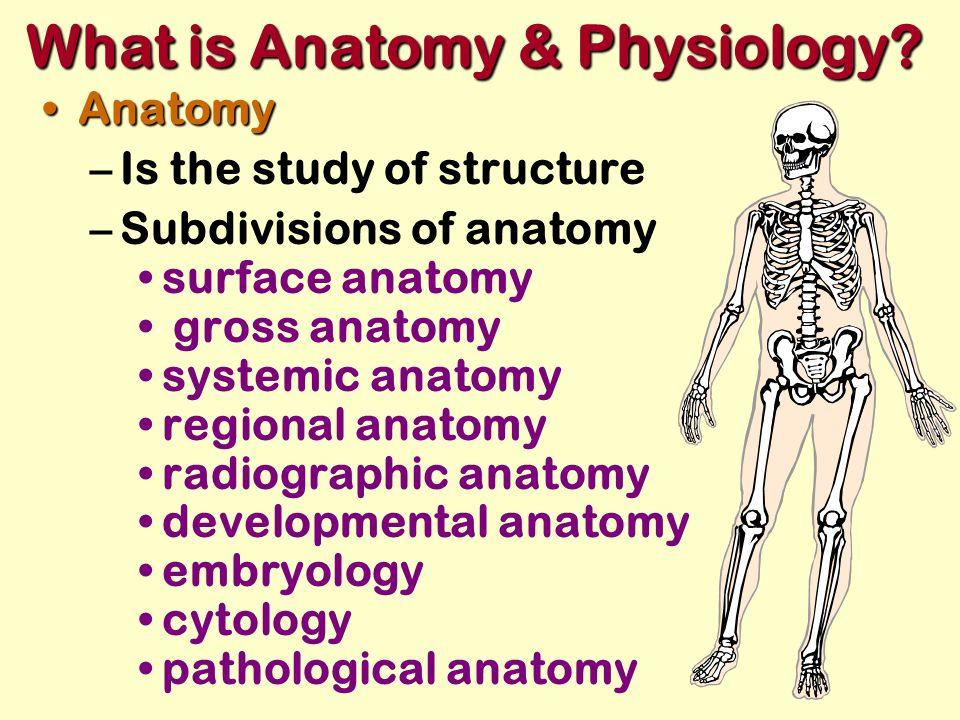 What Is Anatomy The Study Of Choice Image - human body anatomy