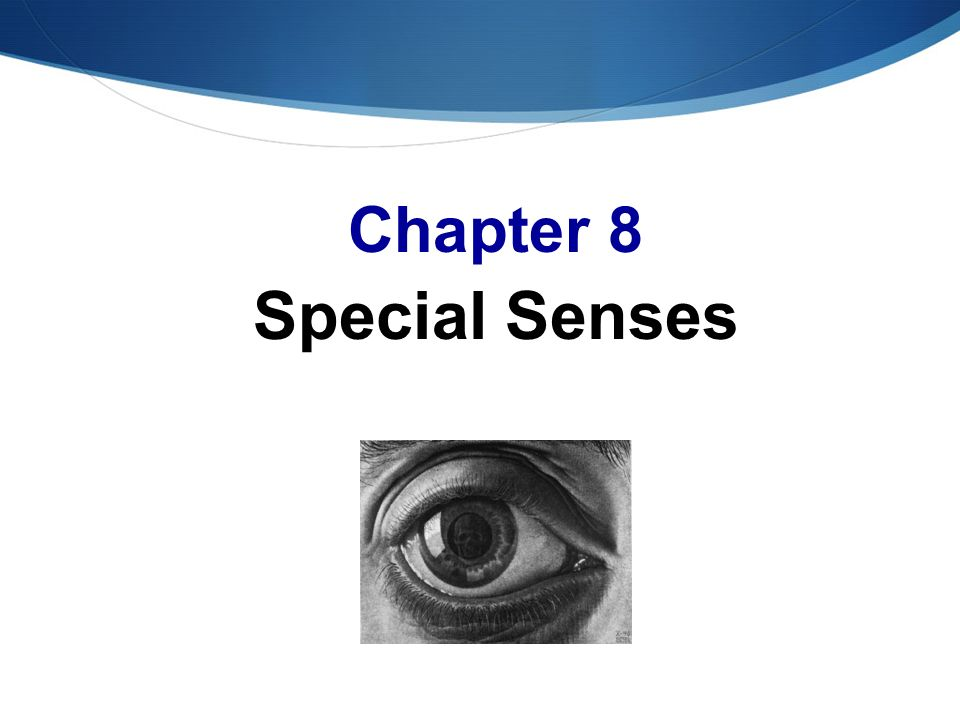 Anatomy Chapter 8 Special Senses Images - human body anatomy