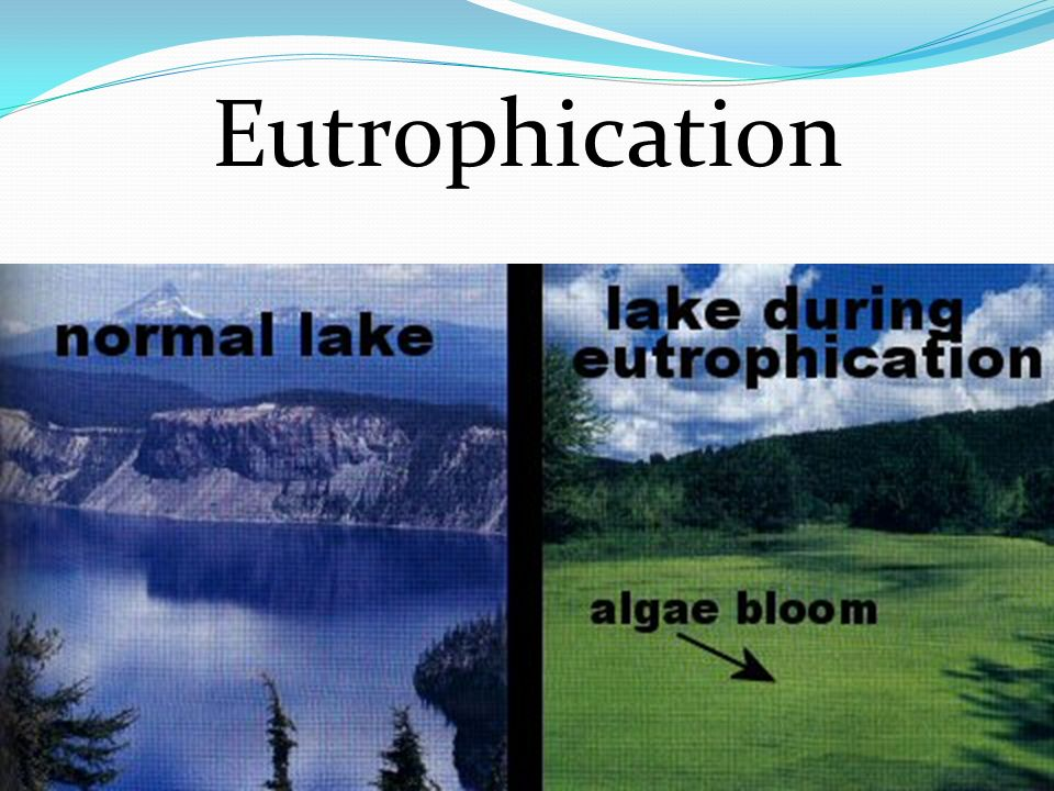 Artificial Eutrophication Nutrients are good for water….but… TOO much can be bad: When nutrients break down or decompose, they use up oxygen.