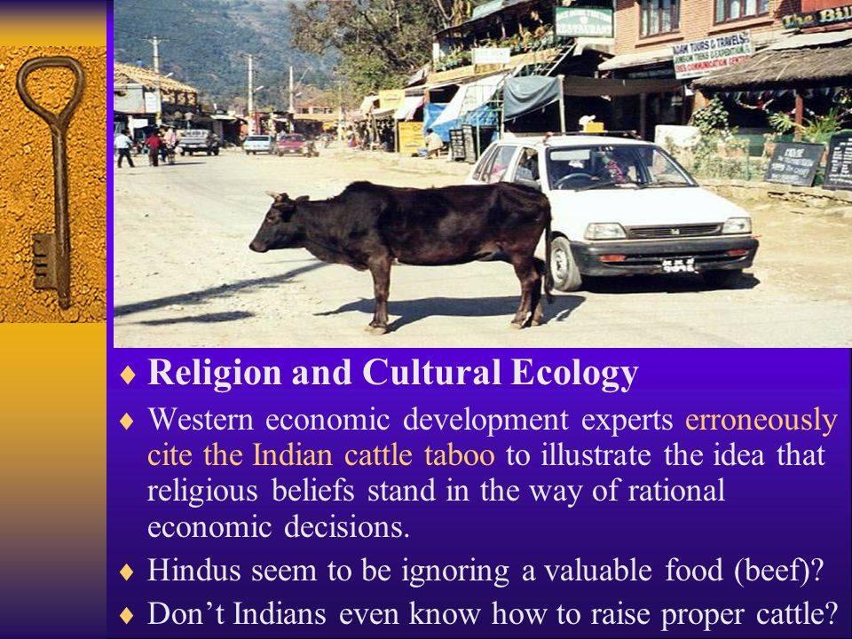  Religion and Cultural Ecology  Western economic development experts erroneously cite the Indian cattle taboo to illustrate the idea that religious beliefs stand in the way of rational economic decisions.