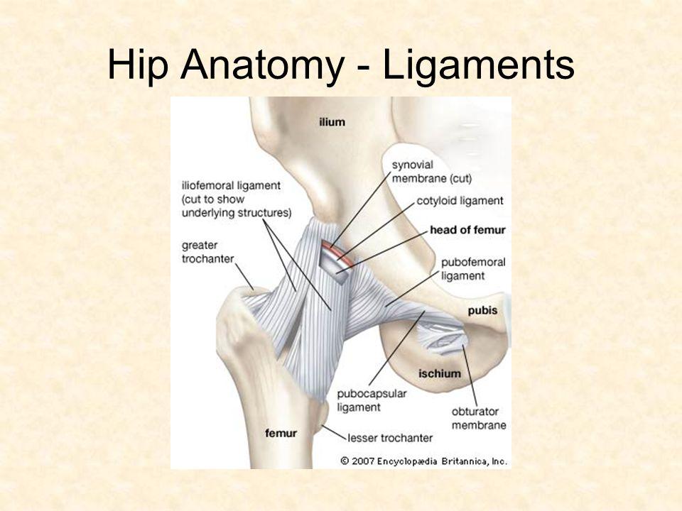 Hip / Low Back. Hip Anatomy - Bones Hip Anatomy - Ligaments. - ppt ...