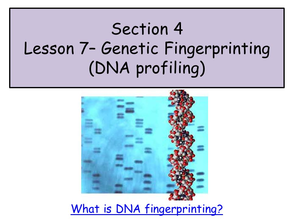 """serious problems with dna fingerprinting In 1984, a british geneticist named alec jeffreys stumbled upon one of our most important forensic tools: dna fingerprinting since his """"eureka moment,"""" the scientific technique has been used."""