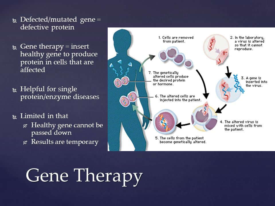 Gene Therapy  Defected/mutated gene = defective protein  Gene therapy = insert healthy gene to produce protein in cells that are affected  Helpful for single protein/enzyme diseases  Limited in that  Healthy gene cannot be passed down  Results are temporary