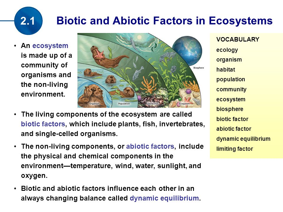 an ecosystem is made up of a community of organisms and the non