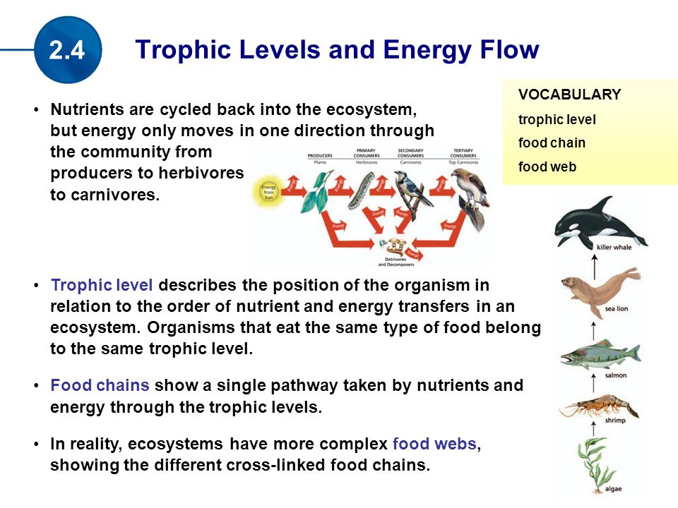 Nutrients are cycled back into the ecosystem, but energy only moves in one direction through the community from producers to herbivores to carnivores.