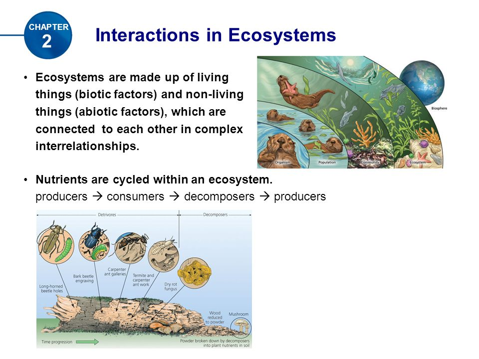Interactions in Ecosystems 2 CHAPTER Ecosystems are made up of living things (biotic factors) and non-living things (abiotic factors), which are connected to each other in complex interrelationships.