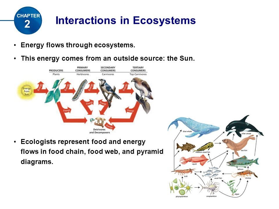 Interactions in Ecosystems Energy flows through ecosystems.