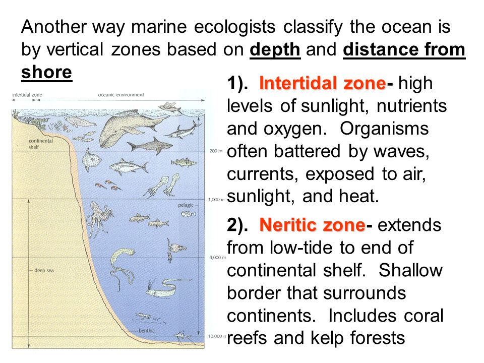 Another way marine ecologists classify the ocean is by vertical zones based on depth and distance from shore Intertidal zone 1).