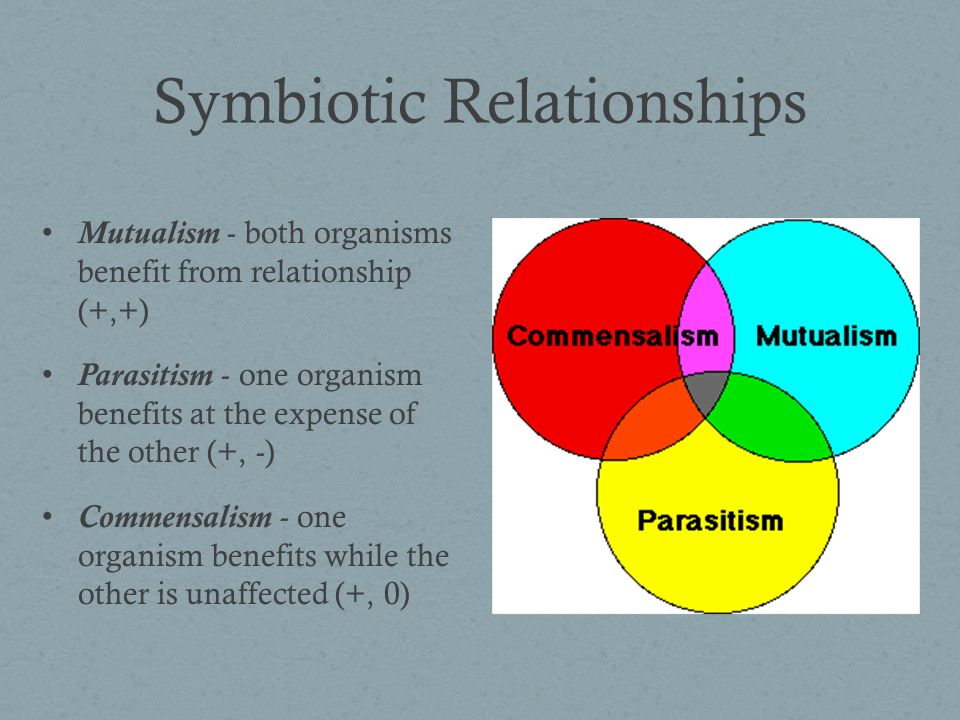 Symbiotic Relationships Relationship between two organisms in which one organism benefits