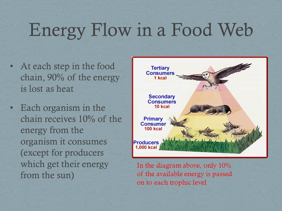 Food Webs Food webs show many food chains and how they are connected to each other Food webs are more accurate representations of the true relationships between organisms Example of a food web