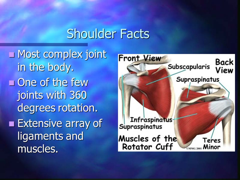 Treatment Options for Shoulder Pain. Anatomy of the Shoulder Made up ...