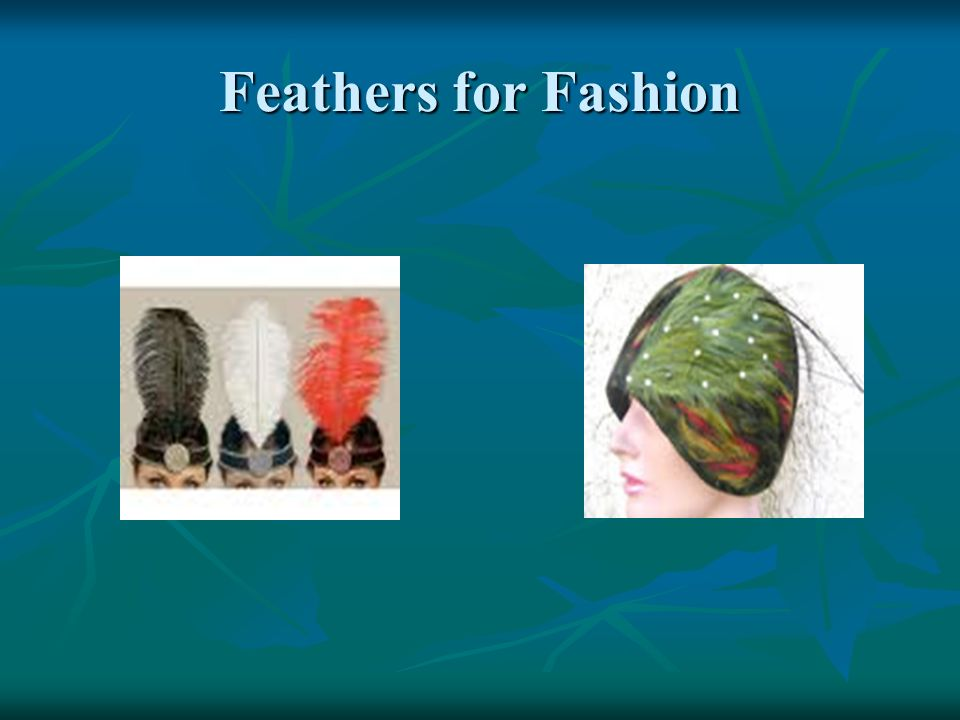 Feathers for Fashion