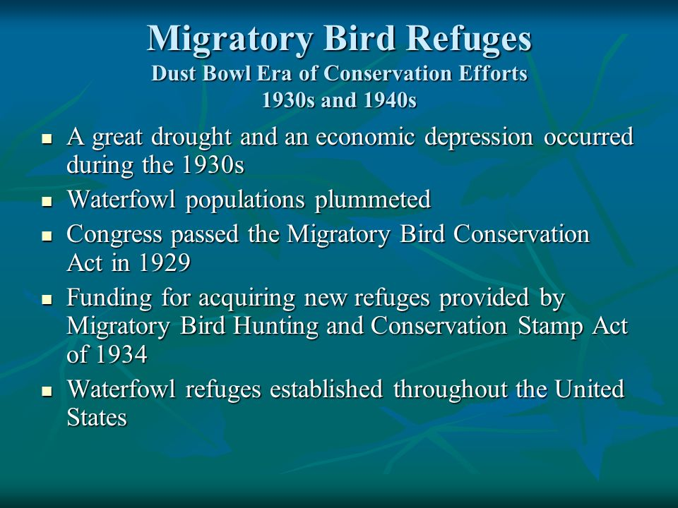 Migratory Bird Refuges Dust Bowl Era of Conservation Efforts 1930s and 1940s A great drought and an economic depression occurred during the 1930s A great drought and an economic depression occurred during the 1930s Waterfowl populations plummeted Waterfowl populations plummeted Congress passed the Migratory Bird Conservation Act in 1929 Congress passed the Migratory Bird Conservation Act in 1929 Funding for acquiring new refuges provided by Migratory Bird Hunting and Conservation Stamp Act of 1934 Funding for acquiring new refuges provided by Migratory Bird Hunting and Conservation Stamp Act of 1934 Waterfowl refuges established throughout the United States Waterfowl refuges established throughout the United States