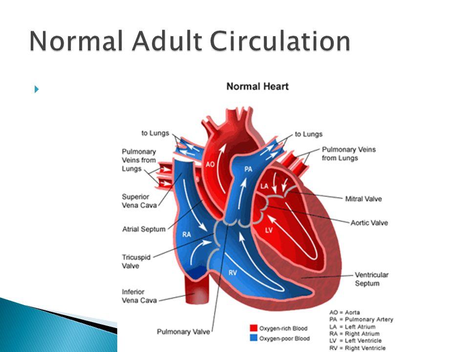 VET 205.  Heart lies within Mediastinum ◦ Mediastinum separates R ...