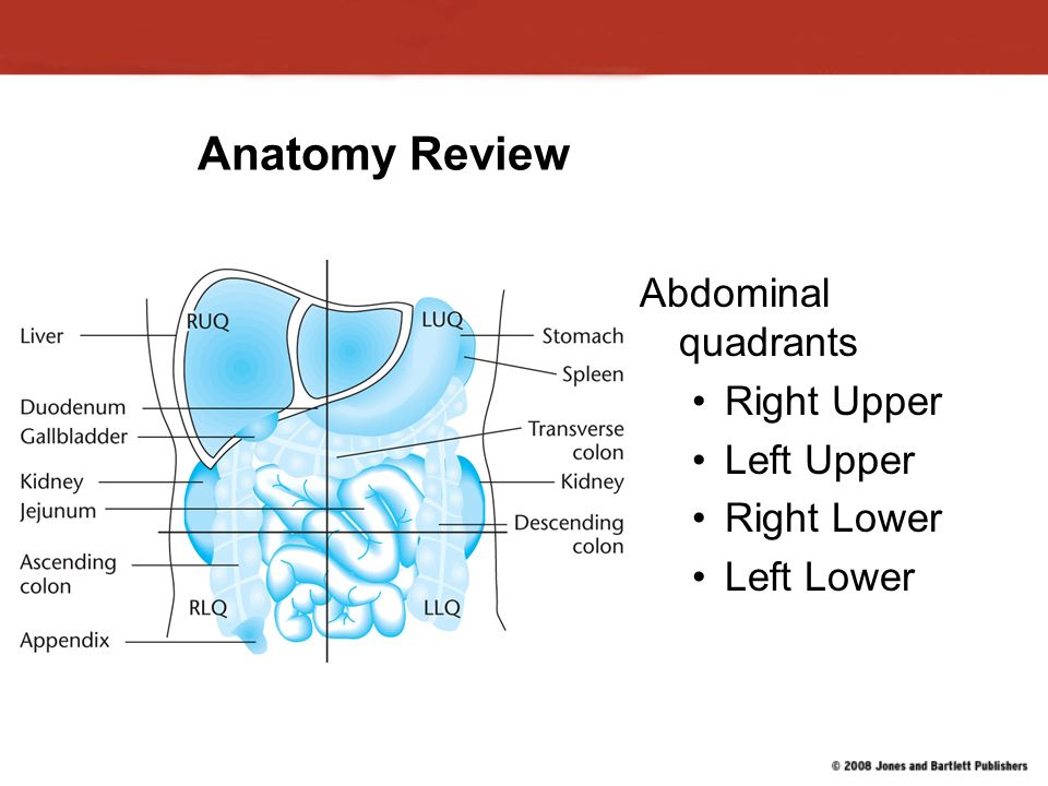 Chapter 13 Injuries to the Thorax and Abdomen. Anatomy Review ...