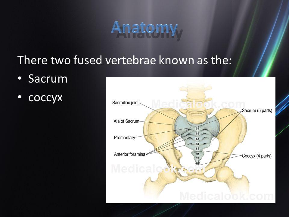 Care & Prevention Chapter Hip & Pelvis. Anatomy The arrangement of ...