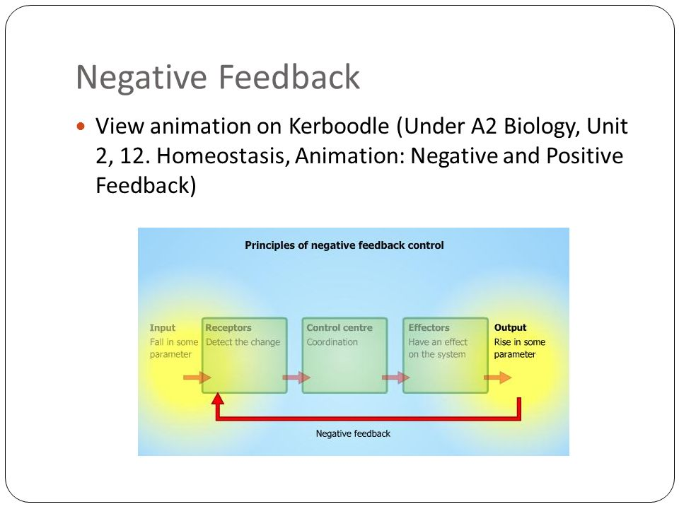 Negative Feedback View animation on Kerboodle (Under A2 Biology, Unit 2, 12.