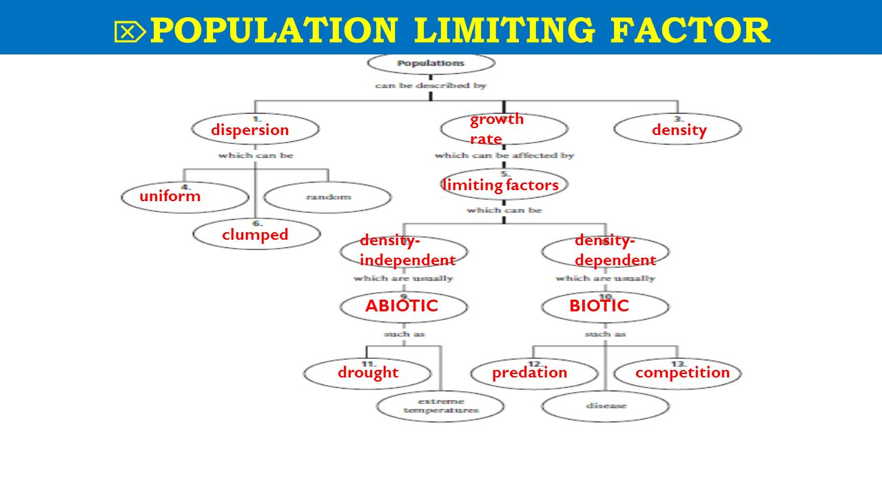 Population Concept Map.Monday Oct 13 Th Week 10 Topic Population Dynamics Obj 3 5