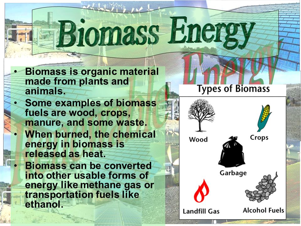 Biomass is organic material made from plants and animals.