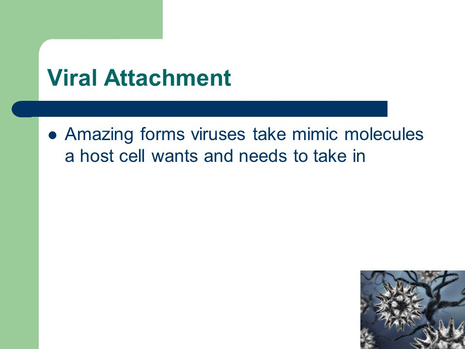 Viral Attachment Amazing forms viruses take mimic molecules a host cell wants and needs to take in
