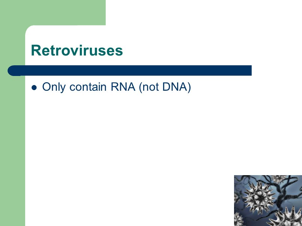 Only contain RNA (not DNA)