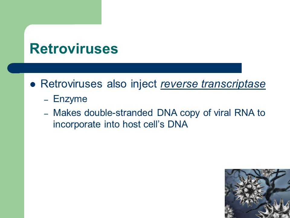 Retroviruses Retroviruses also inject reverse transcriptase – Enzyme – Makes double-stranded DNA copy of viral RNA to incorporate into host cell's DNA